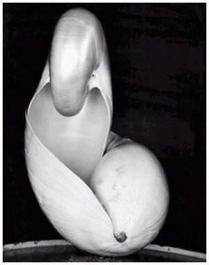 Edward Weston